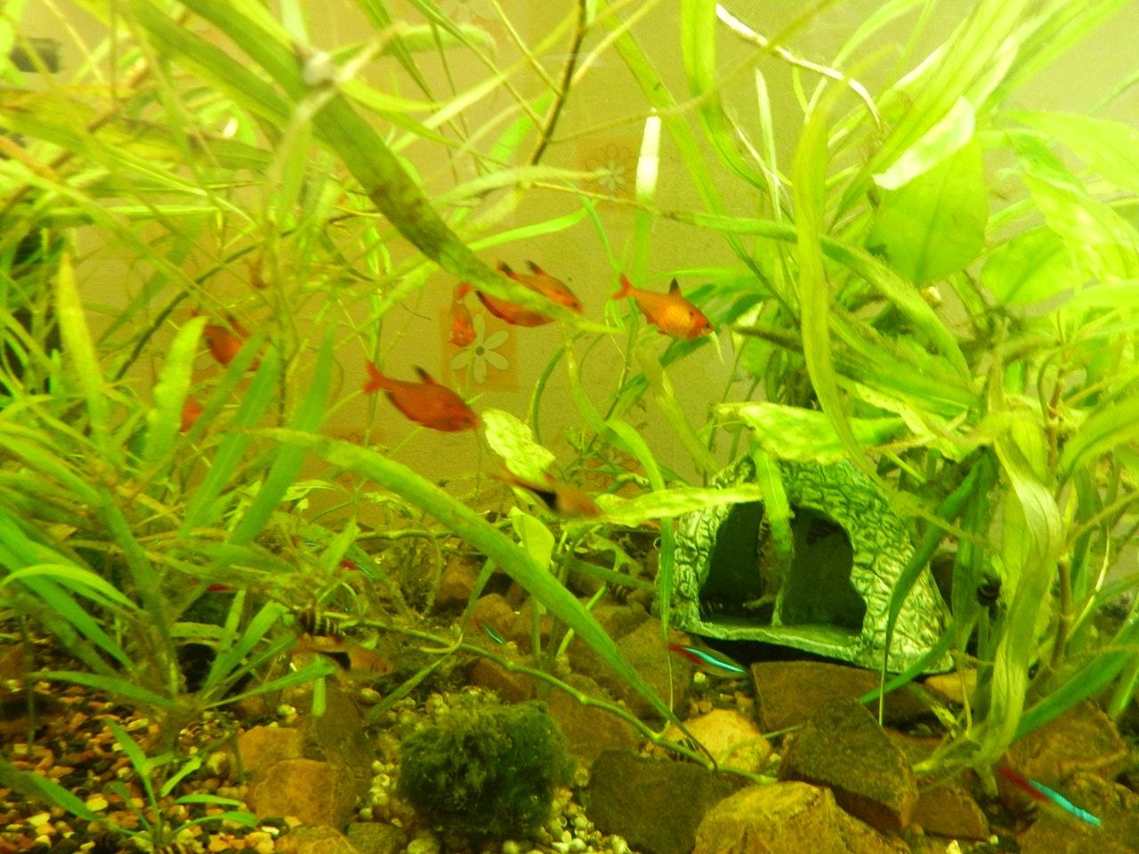 Comment lutter contre les algues dans son aquarium