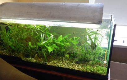 Comment entretenir un aquarium?