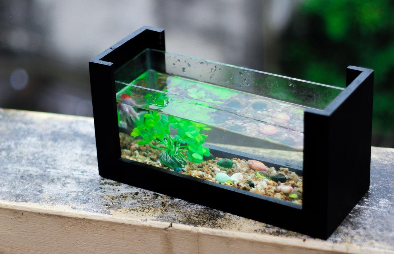 Du bac à un joli aquarium