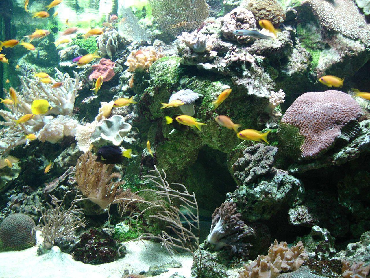 Les aquariums communautaires