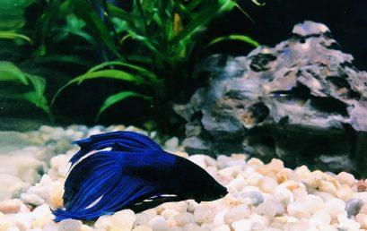 C'est quoi un aquarium biotope?