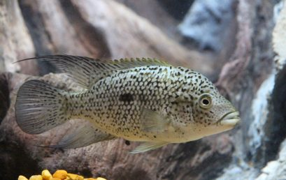 Aquarium : mieux comprendre la vie marine