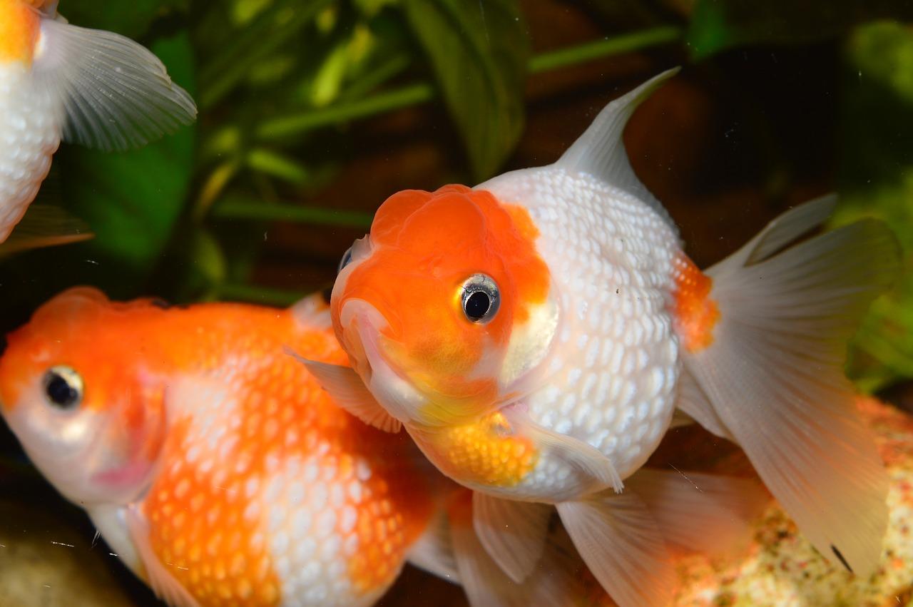 Aquarium eau douce