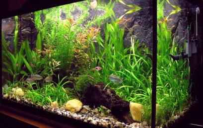 Zoom sur les plantes d'aquarium