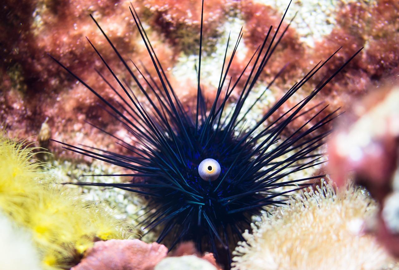 Les poissons herbivores : que faut-il savoir à ce propos ?